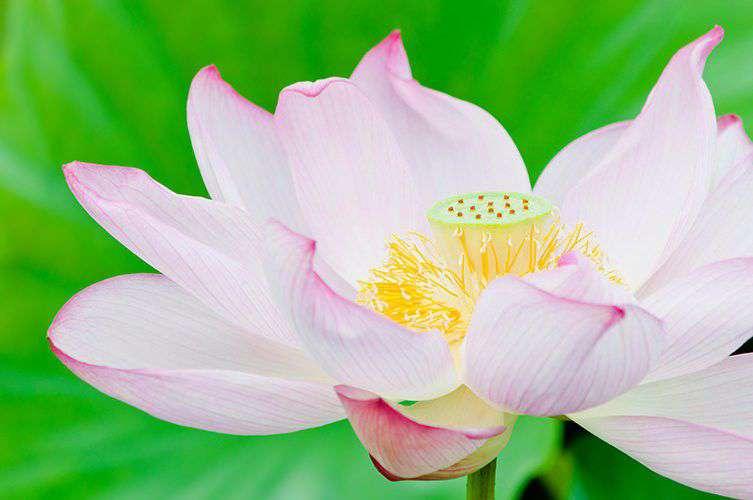 ELLY99_pinkironohasunohana500-thumb-753x500-3646