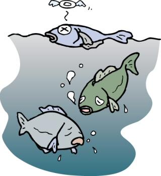 えら呼吸の魚